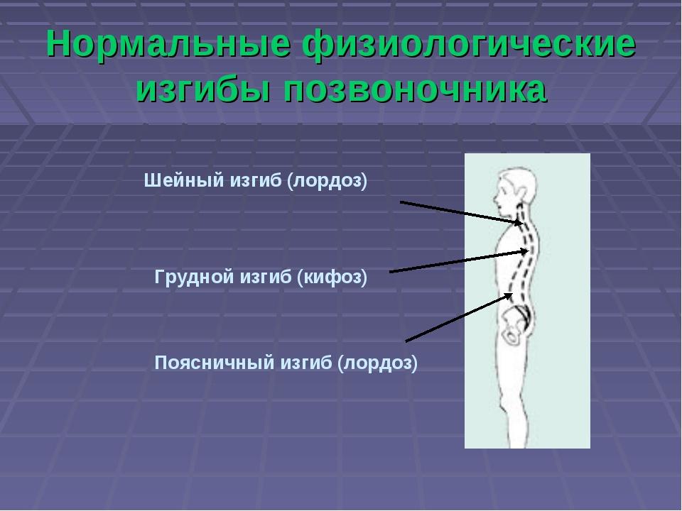 Нормальные физиологические изгибы позвоночника Шейный изгиб (лордоз) Грудной...