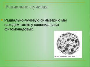 Радиально-лучевая Радиально-лучевую симметрию мы находим также у колониальных