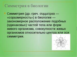 Симметрия в биологии Симметрия (др.-греч. συμμετριαι — «соразмерность») в био