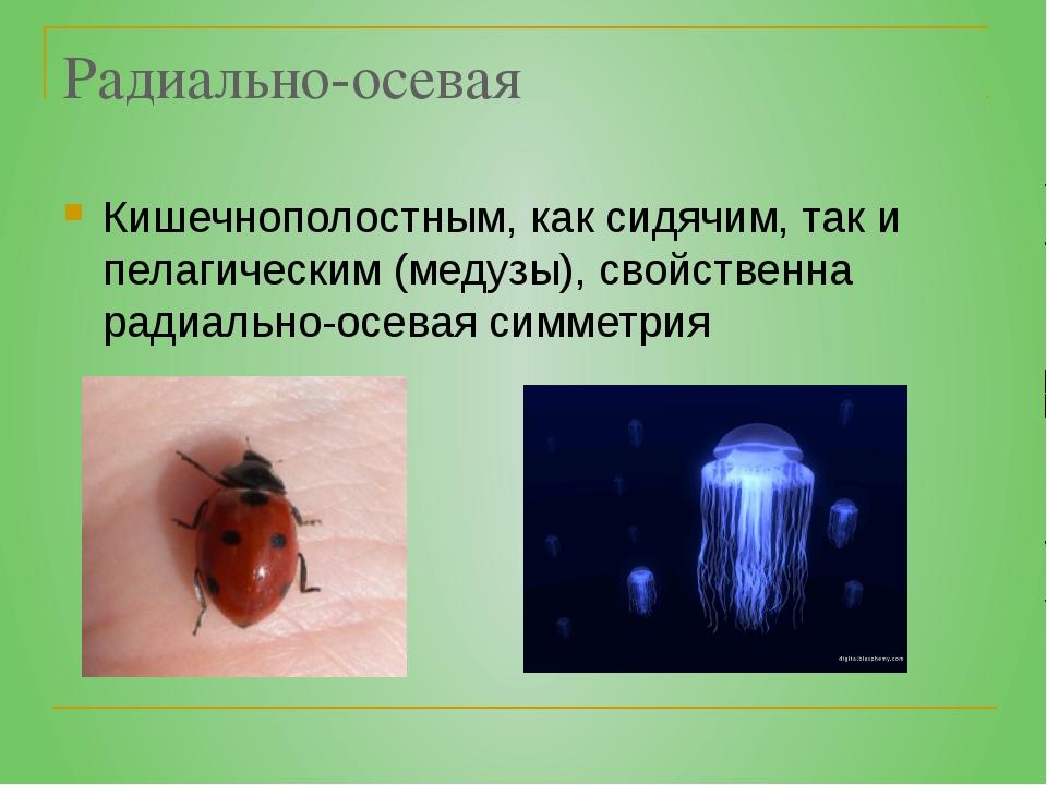 Радиально-осевая Кишечнополостным, как сидячим, так и пелагическим (медузы),...