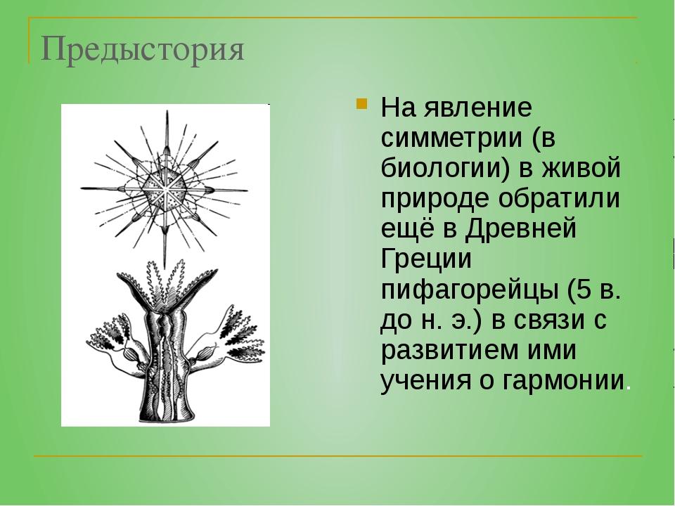 Предыстория На явление симметрии (в биологии) в живой природе обратили ещё в...