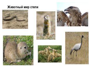 Животный мир степи