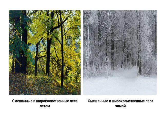 Смешанные и широколиственные леса летом Смешанные и широколиственные леса зимой