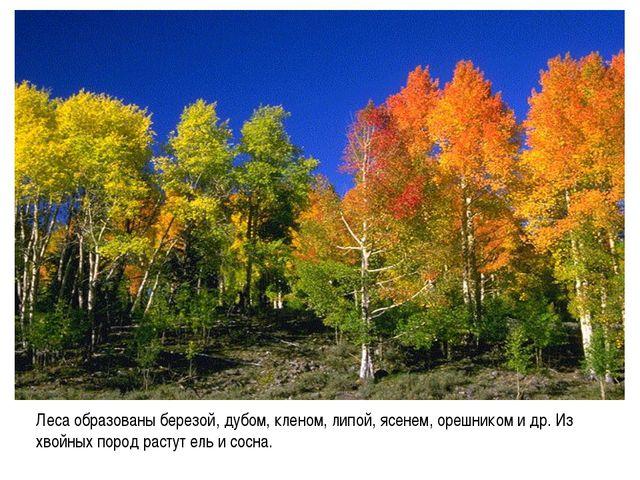 Леса образованы березой, дубом, кленом, липой, ясенем, орешником и др. Из хво...