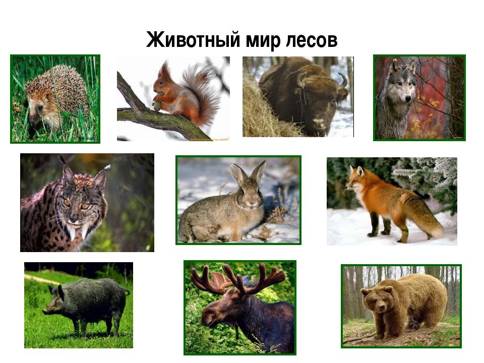 Животный мир лесов