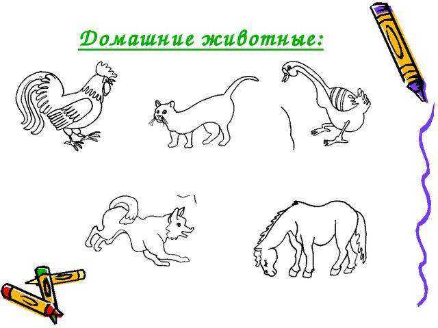 Домашние животные: