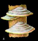 Image242