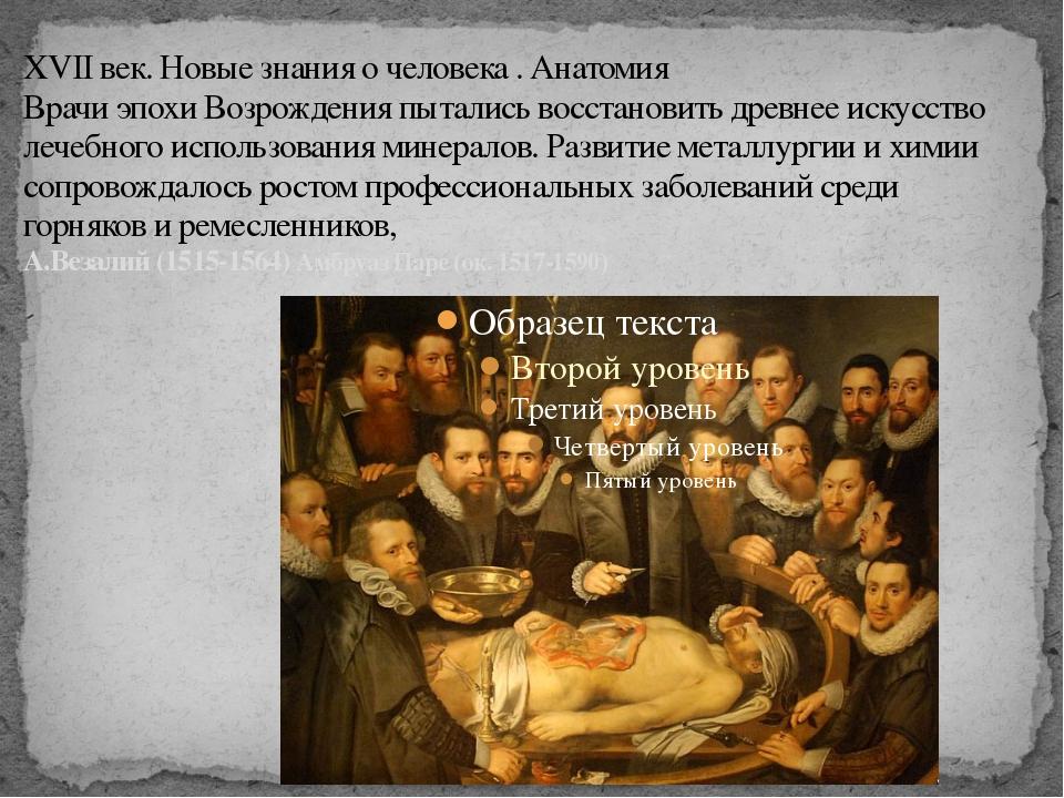 XVII век. Новые знания о человека . Анатомия Врачи эпохи Возрождения пытались...
