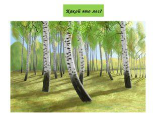 Какой это лес?