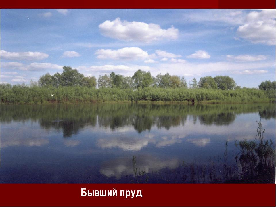 Бывший пруд