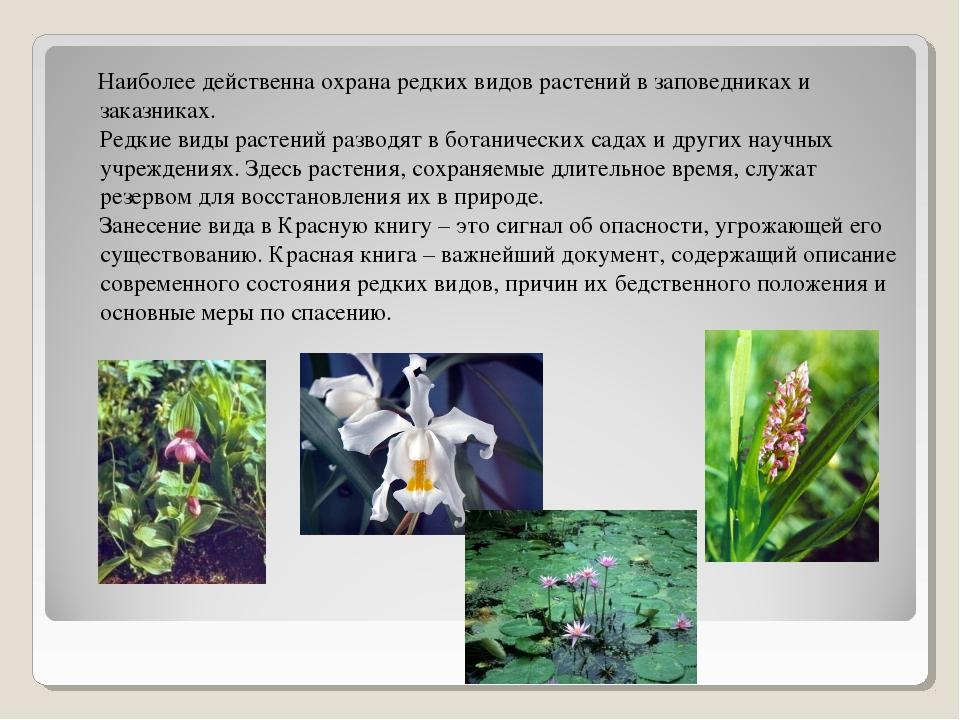 Наиболее действенна охрана редких видов растений в заповедниках и заказниках...