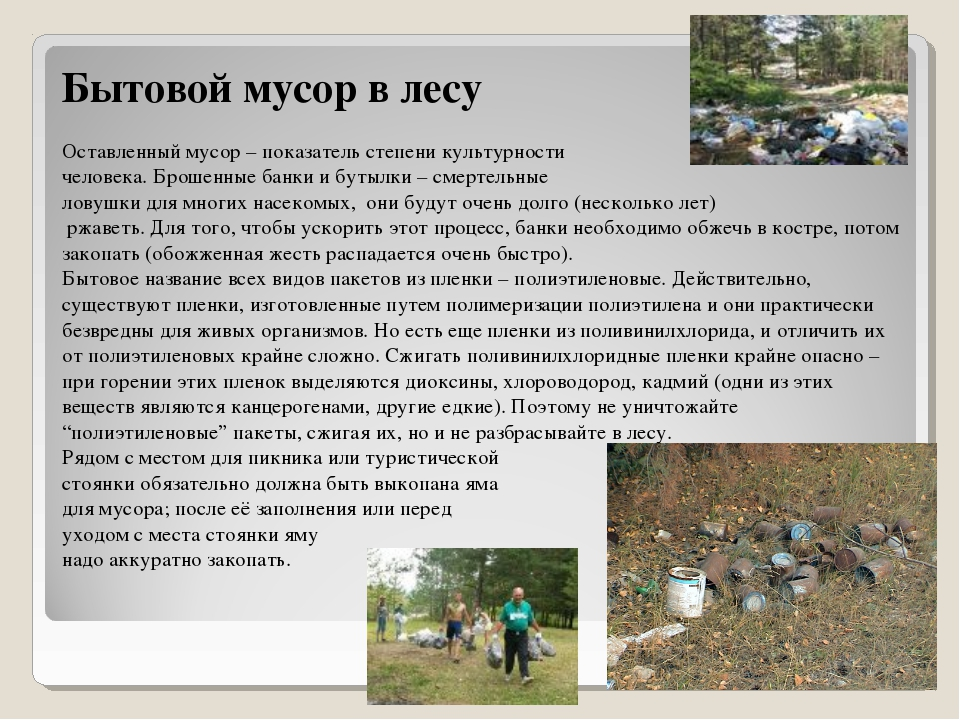 Бытовой мусор в лесу Оставленный мусор – показатель степени культурности чело...