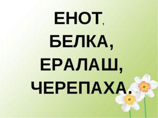 ЕНОТ, БЕЛКА, ЕРАЛАШ, ЧЕРЕПАХА.