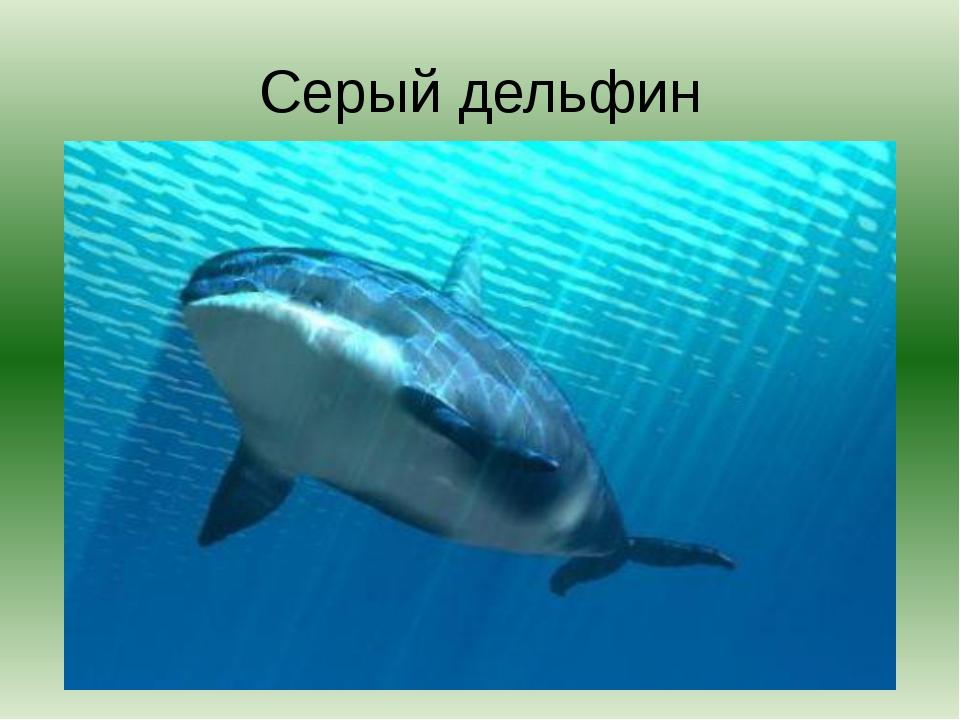 Серый дельфин