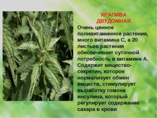 КРАПИВА ДВУДОМНАЯ Очень ценное поливитаминное растение, много витамина С, а 2