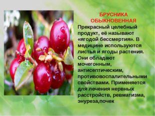 БРУСНИКА ОБЫКНОВЕННАЯ Прекрасный целебный продукт, её называют «ягодой бессме