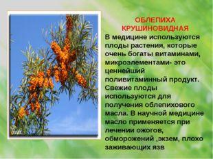 ОБЛЕПИХА КРУШИНОВИДНАЯ В медицине используются плоды растения, которые очень