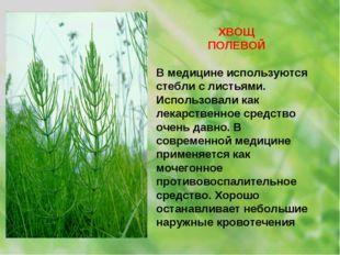 ХВОЩ ПОЛЕВОЙ В медицине используются стебли с листьями. Использовали как лека