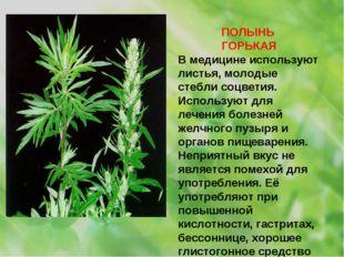 ПОЛЫНЬ ГОРЬКАЯ В медицине используют листья, молодые стебли соцветия. Использ