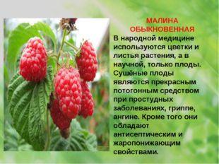 МАЛИНА ОБЫКНОВЕННАЯ В народной медицине используются цветки и листья растения