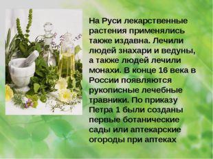 На Руси лекарственные растения применялись также издавна. Лечили людей знахар