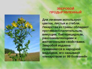 ЗВЕРОБОЙ ПРОДЫРЯВЛЕННЫЙ Для лечения используют цветки, листья и стебли. Лекар