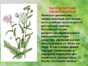 ТЫСЯЧЕЛИСТНИК ОБЫКНОВЕННЫЙ Являлся ценнейшим лекарственным растением, хотя и