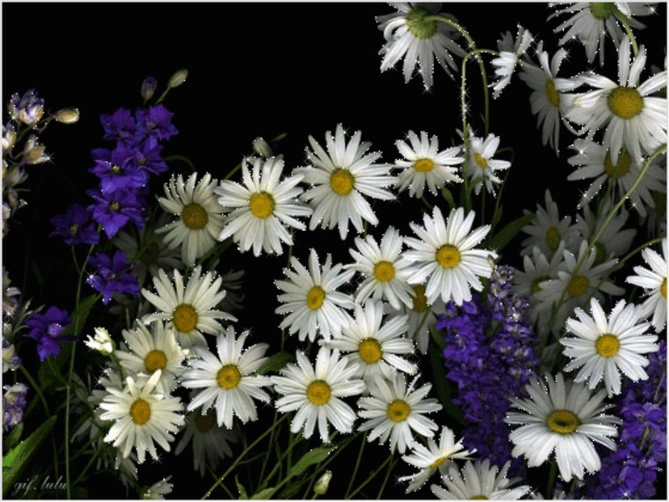 Анимационные картинки с полевыми цветами