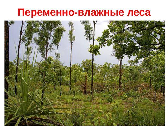 Переменно-влажные леса