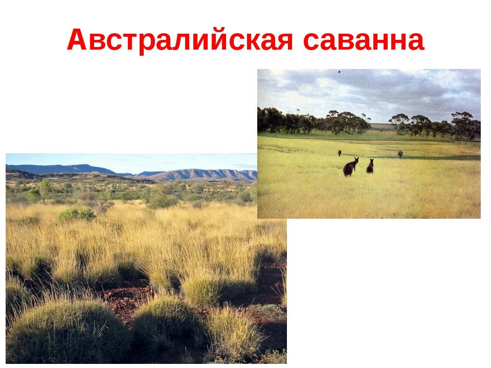 Австралийская саванна