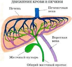 http://www.tepka.ru/biologiya_cheloveka/30.4.jpg