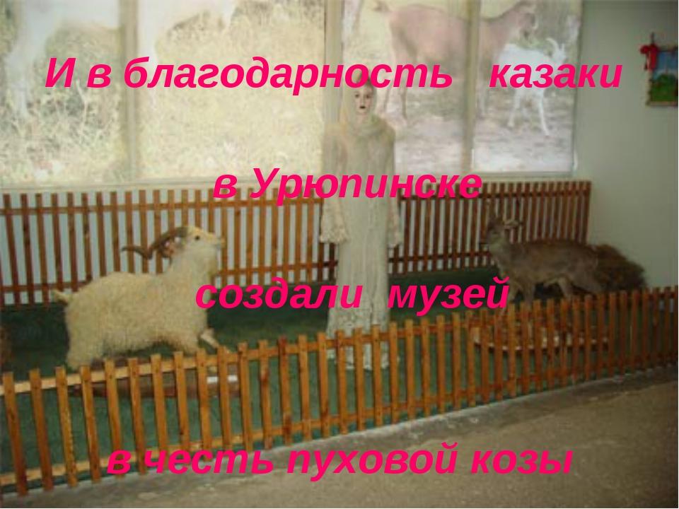 И в благодарность казаки в Урюпинске создали музей в честь пуховой козы