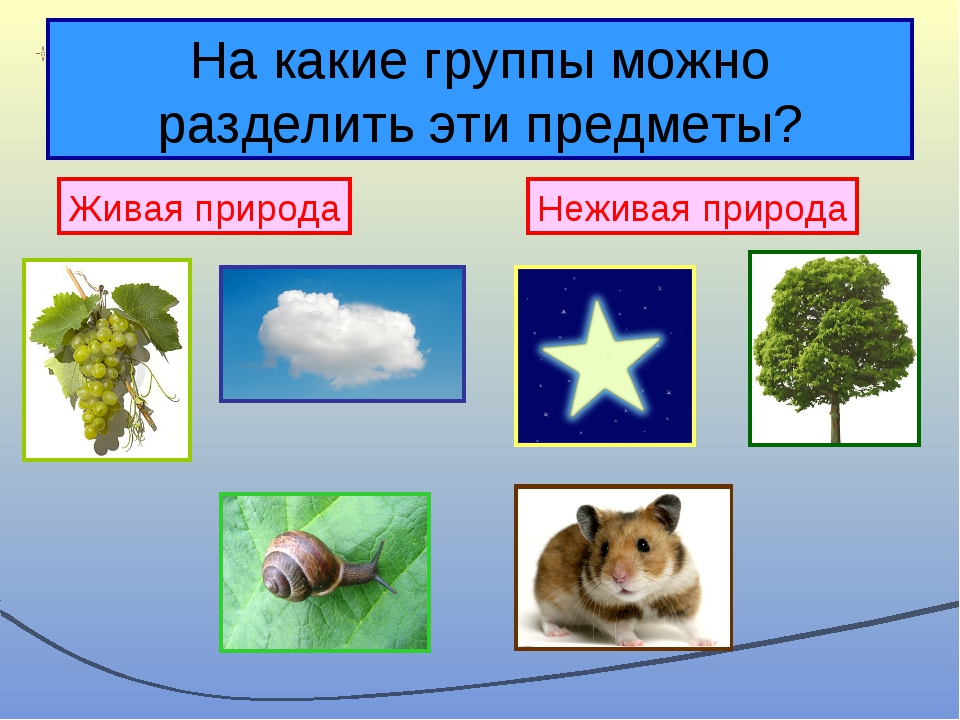 На какие группы можно разделить эти предметы? Живая природа Неживая природа