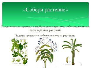Предлагаются карточки с изображением цветков, побегов, листьев и плодов разны