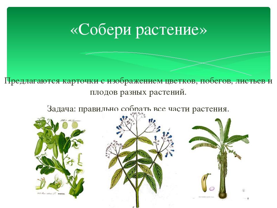 Предлагаются карточки с изображением цветков, побегов, листьев и плодов разны...