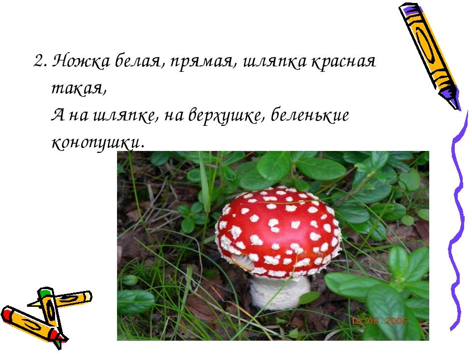 2. Ножка белая, прямая, шляпка красная такая, А на шляпке, на верхушке, белен...
