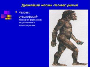 Древнейший человек -Человек умелый Человек рудольфский- переходная форма межд