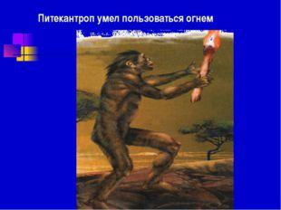 Питекантроп умел пользоваться огнем