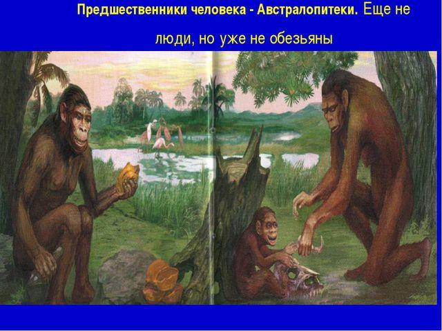 Предшественники человека - Австралопитеки. Еще не люди, но уже не обезьяны