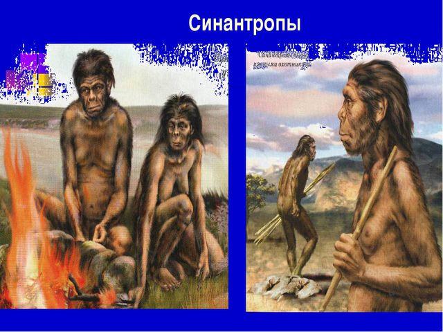 Синантропы