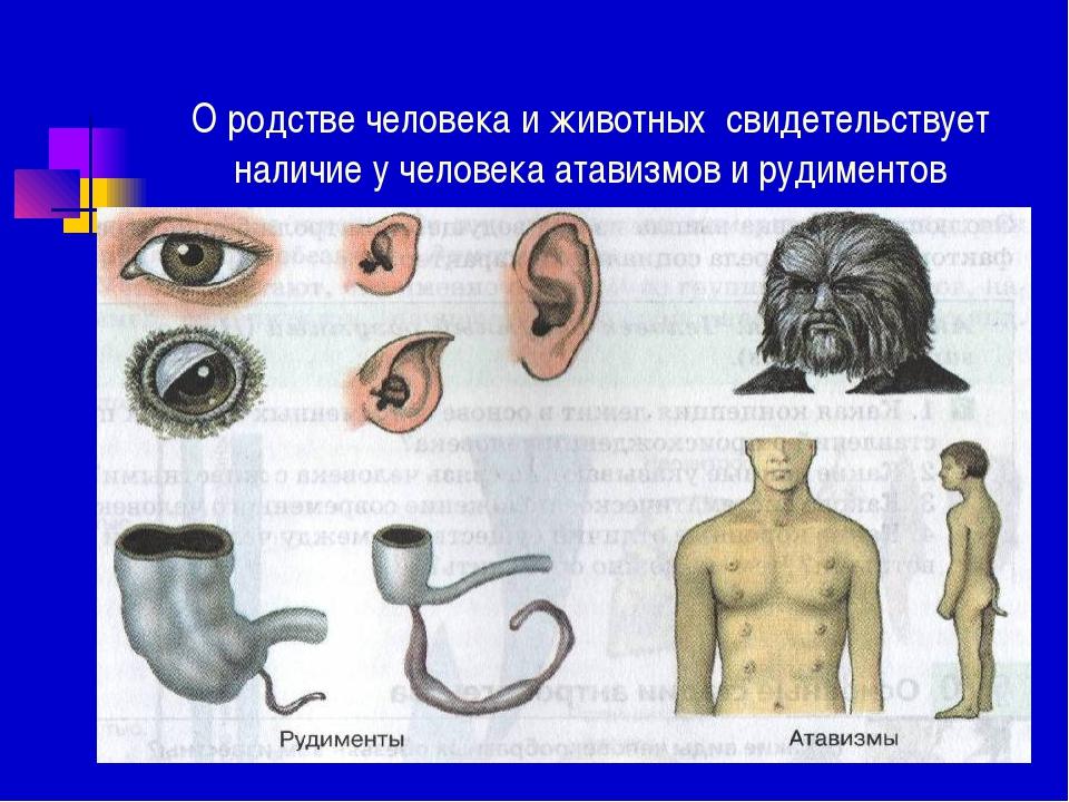 О родстве человека и животных свидетельствует наличие у человека атавизмов и...