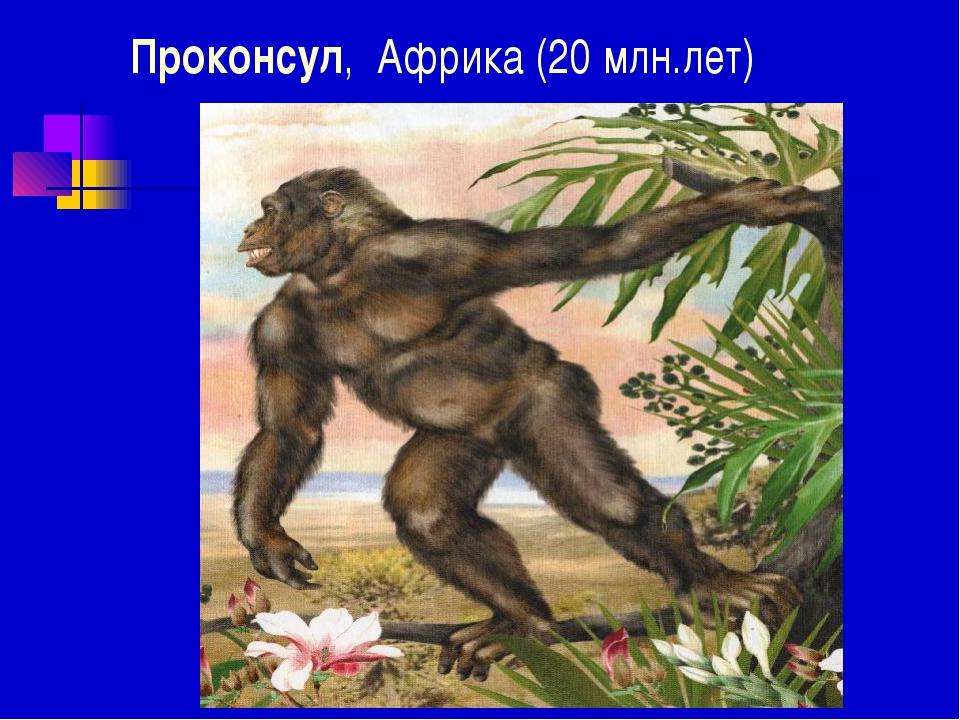 Проконсул, Африка (20 млн.лет)