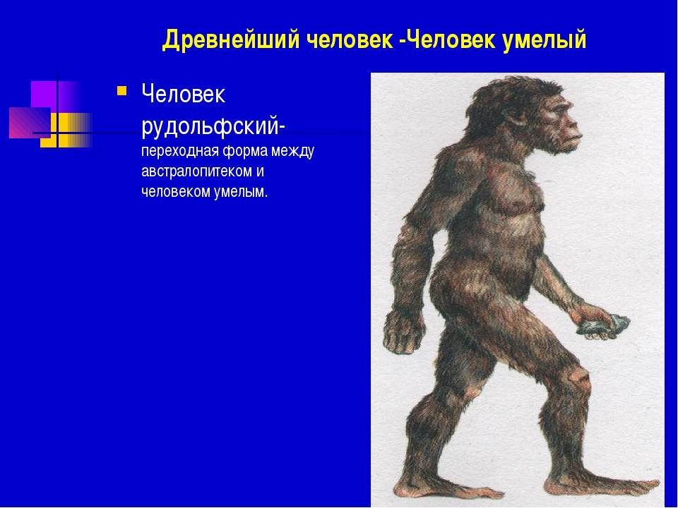 Древнейший человек -Человек умелый Человек рудольфский- переходная форма межд...