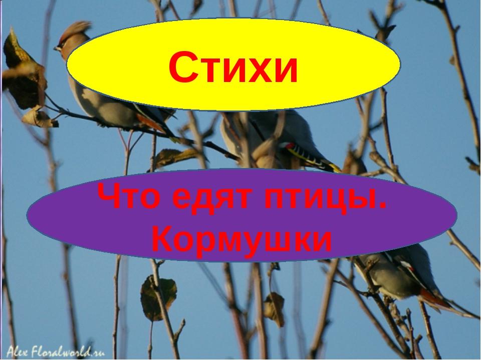 Стихи Что едят птицы. Кормушки