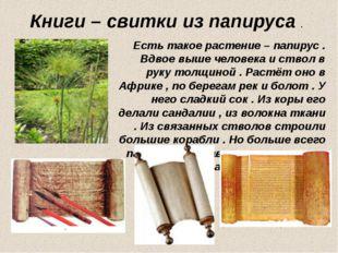 Книги – свитки из папируса . Есть такое растение – папирус . Вдвое выше челов