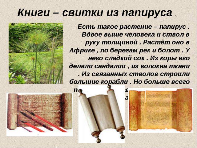 Книги – свитки из папируса . Есть такое растение – папирус . Вдвое выше челов...