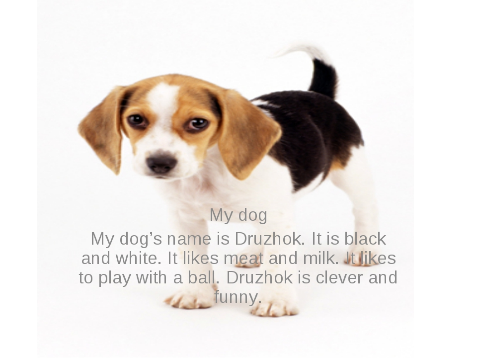 My dog My dog's name is Druzhok. It is black and white. It likes meat and mil...