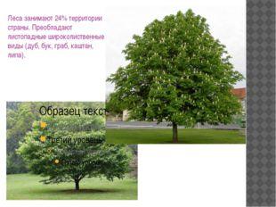 Леса занимают 24% территории страны. Преобладают листопадные широколиственные