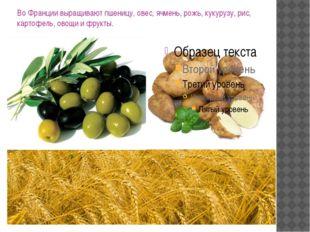 ВоФранции выращивают пшеницу, овес, ячмень, рожь, кукурузу, рис, картофель,