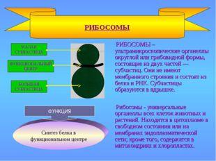 РИБОСОМЫ – ультрамикроскопические органеллы округлой или грибовидной формы,